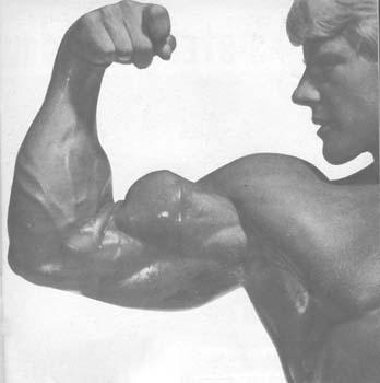 biceps_9.jpg