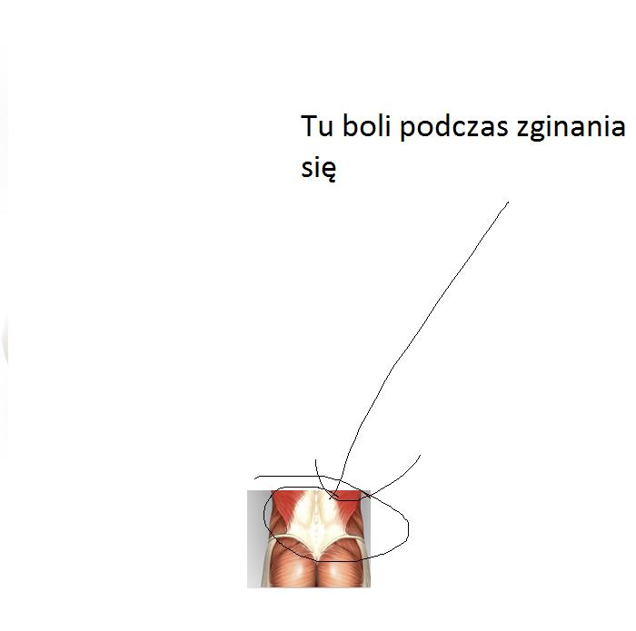plecy_4.png