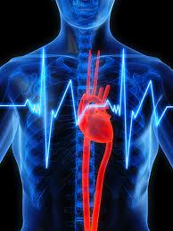 cardio.jpg