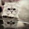 Marbo Suwnica na nogi z hak maszyną ms-u006 - ostatni post przez -Cat-